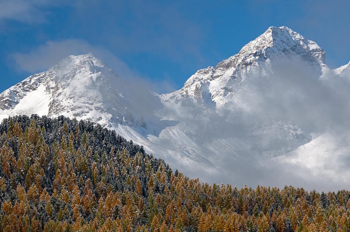 Larici con neve 03
